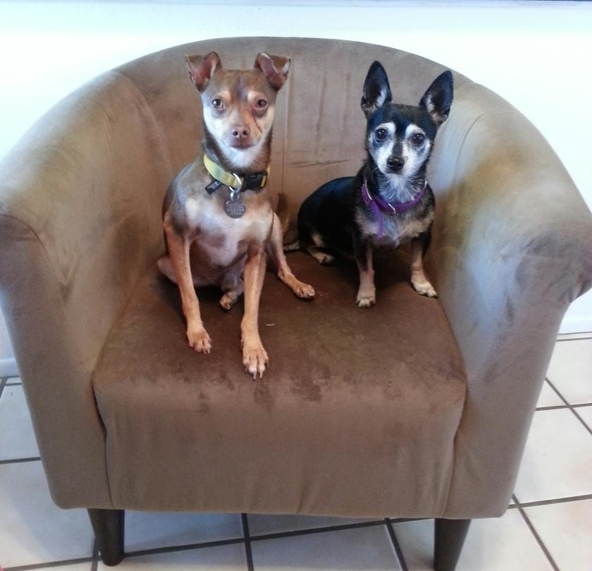 Jasper (L) and Molly